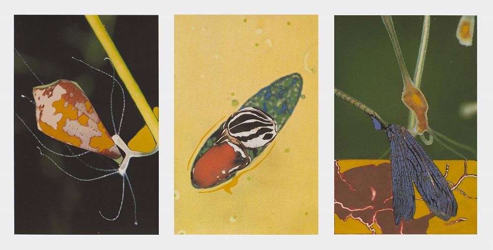 Animalitos, 2020. Monotipo (impresión digital y acrílico), 60 x 40 cm. (c.u.)