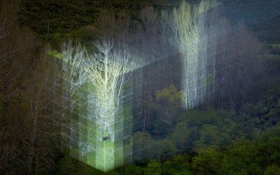 2018 – Una creciente transparencia | Javier Riera
